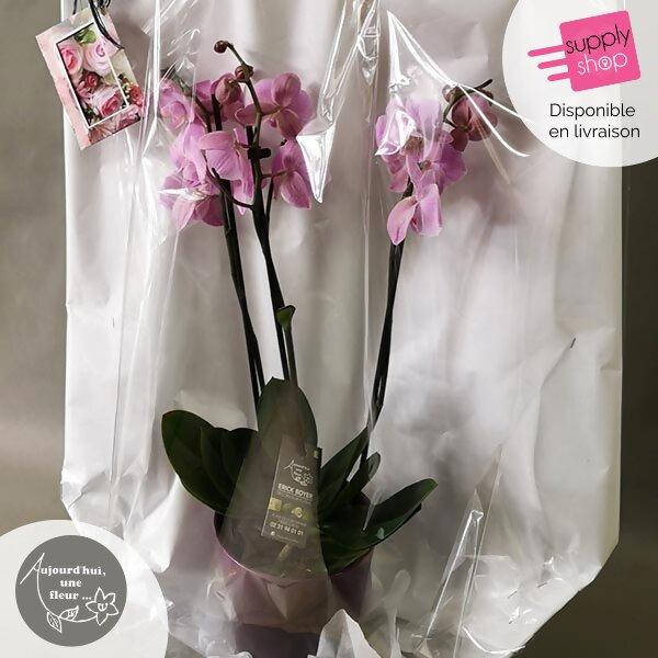 Orchidée aujourd'hui une fleur caen