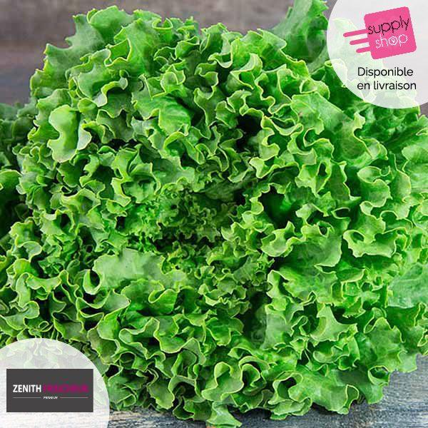 Salade Batavia Zénith Fraîcheur