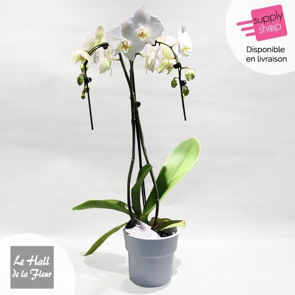 orchidée hall de la fleur livraison
