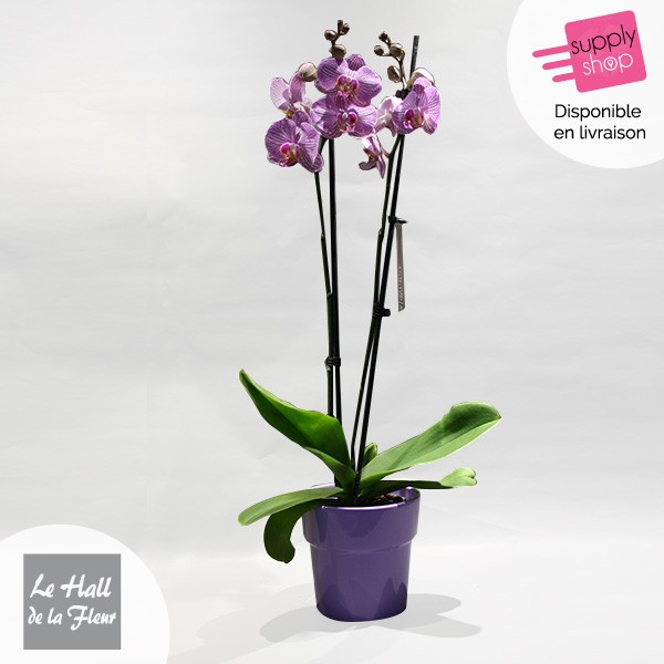 orchidée hall de la fleur