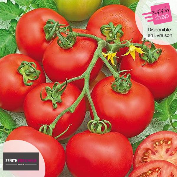 tomates zenith fraicheur