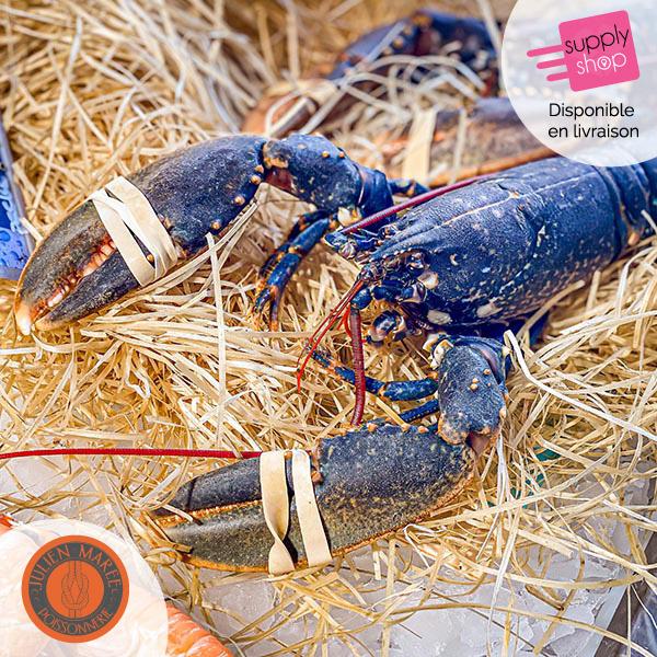 homard bleu julien marée