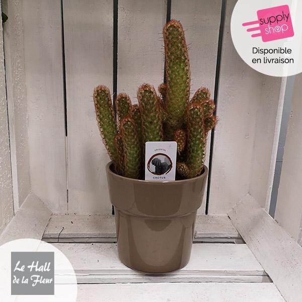 cactus hall de la fleur